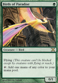 Birds of Paradise - 10th Edition