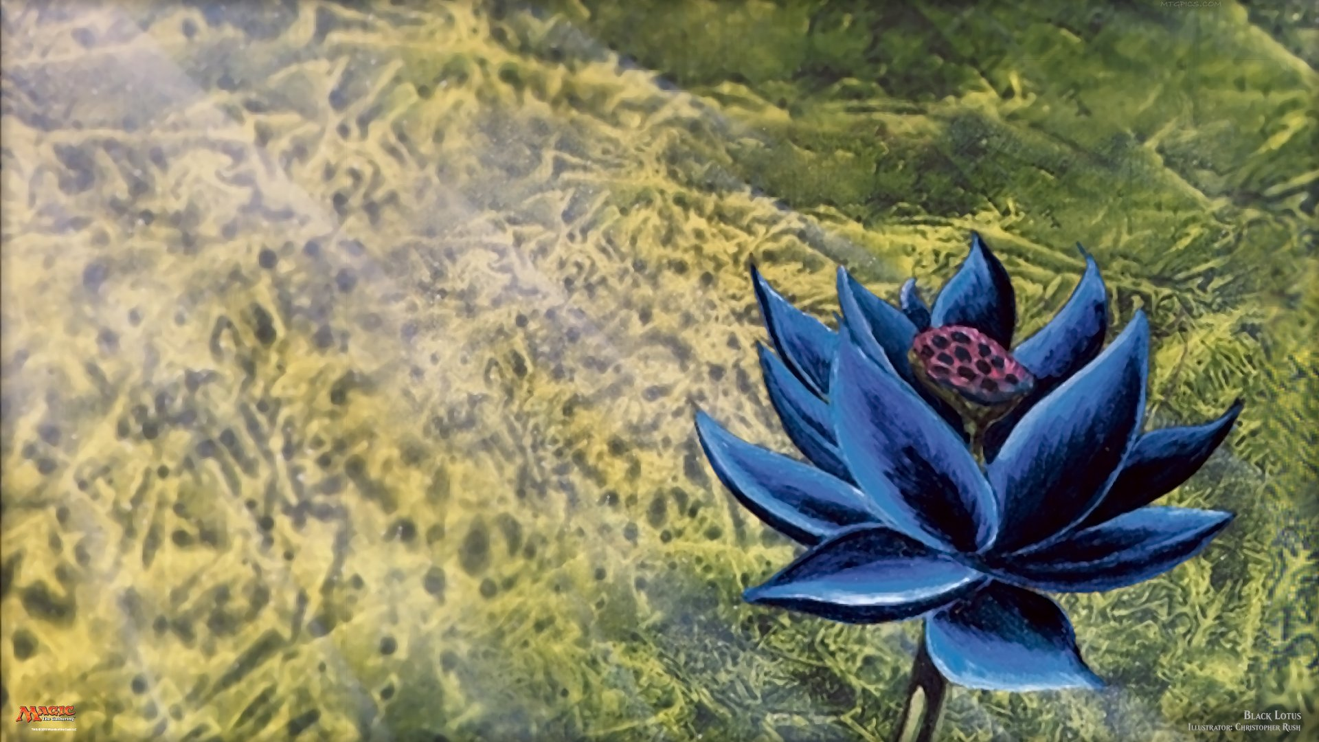 Black Lotus (Limited Alpha) | Illustration by Christopher Rush