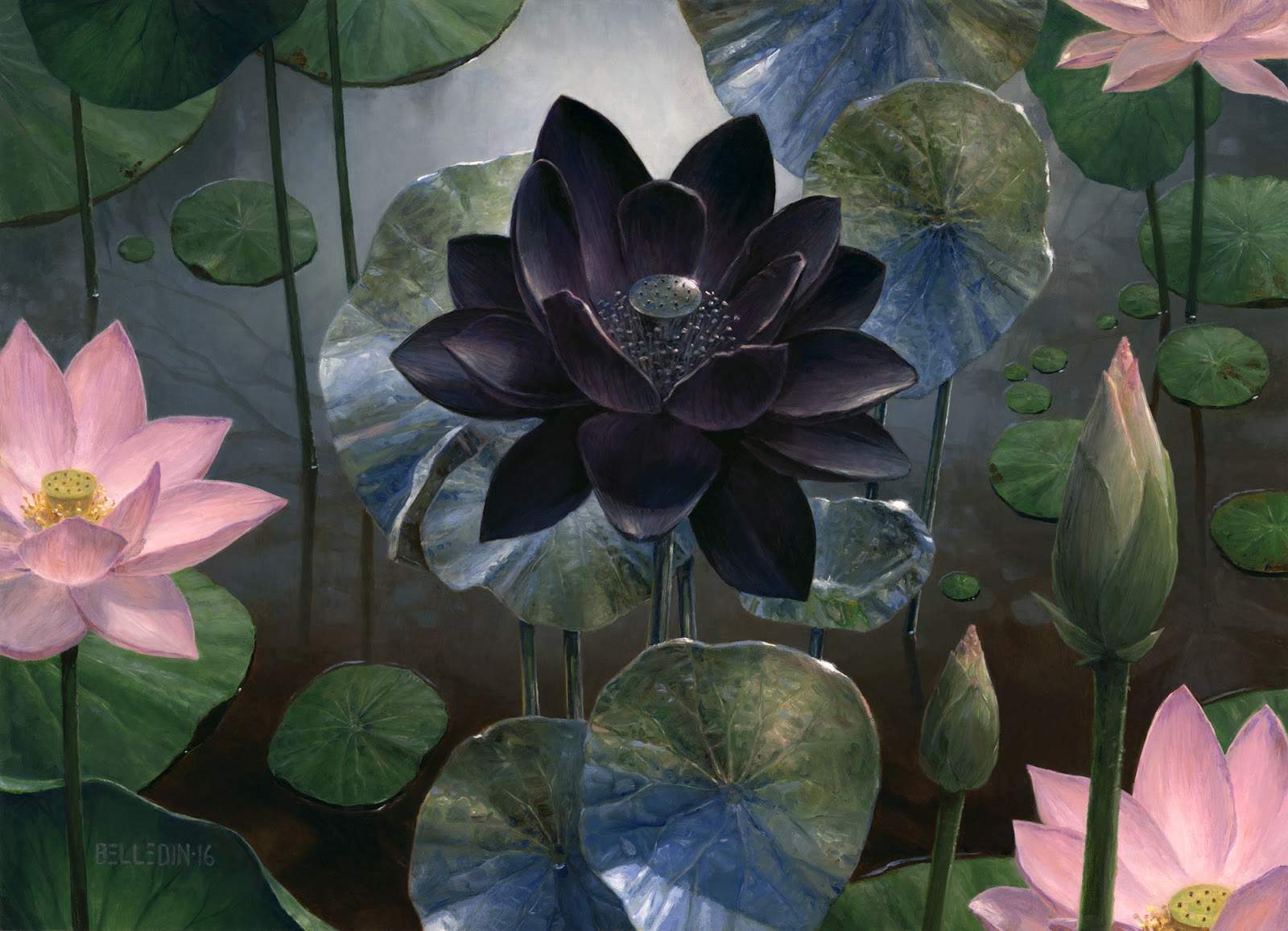 Black Lotus (Ultra Rare Cards)   Illustration by Steven Belledin