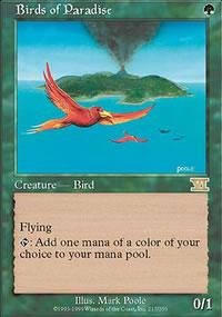 Birds of Paradise - 6th Edition
