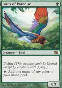 Birds of Paradise - 8th Edition