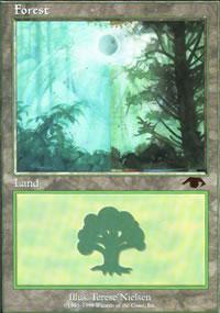 Forest - GURU Lands