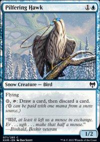 Pilfering Hawk -