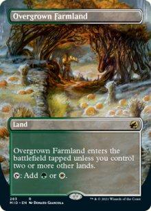 Overgrown Farmland -
