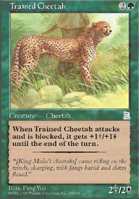 Trained Cheetah - Portal Three Kingdoms