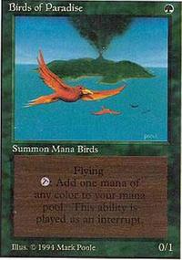 Birds of Paradise - Summer Magic