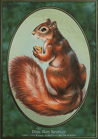 Squirrel - Unglued